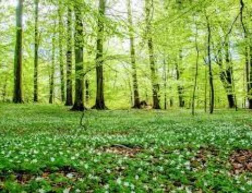 """""""Szukamy wiosny w lesie"""" – konkurs rodzinny"""