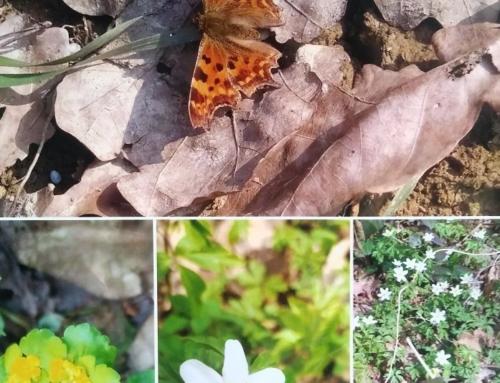 """""""Szukamy wiosny w lesie"""" oraz """"Dzień Ziemi w czasie pandemii"""" – wyniki"""